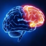 frontal-lobe-functions-structure-and-damage