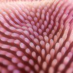 celiac целиакия