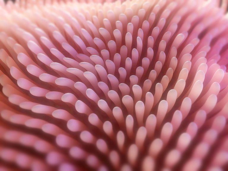 целиакия ворсинки кишечника