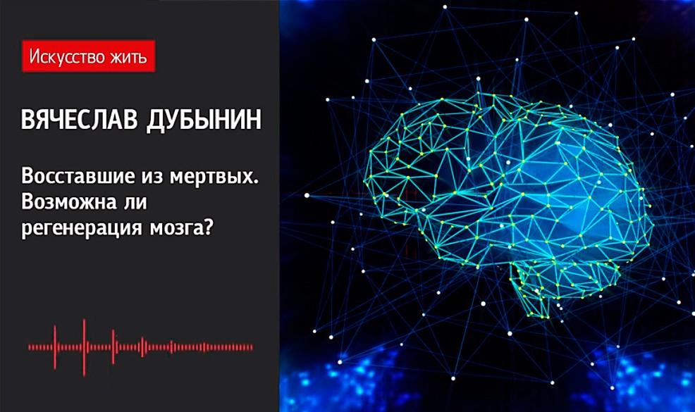 Возможна ли регенерация мозга