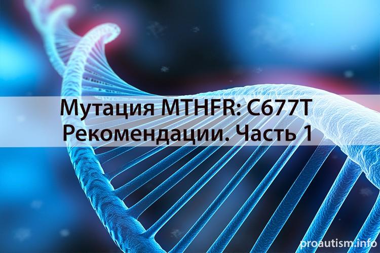 Мутация MTHFR: C677T рекомендации