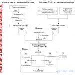 magnij-i-metabolizm-vitamina-D