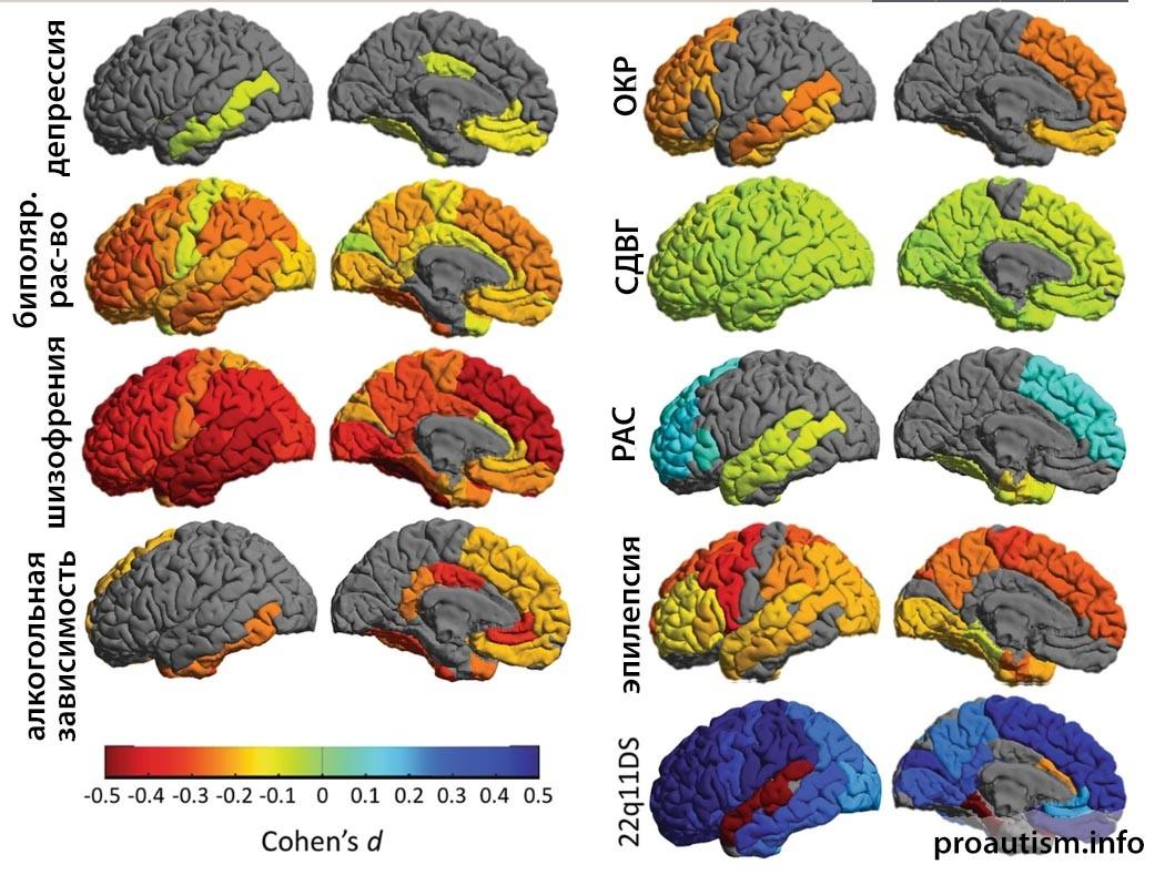Рис. 2: Крупномасштабные исследования ENIGMA по девяти нарушениям головного мозга.