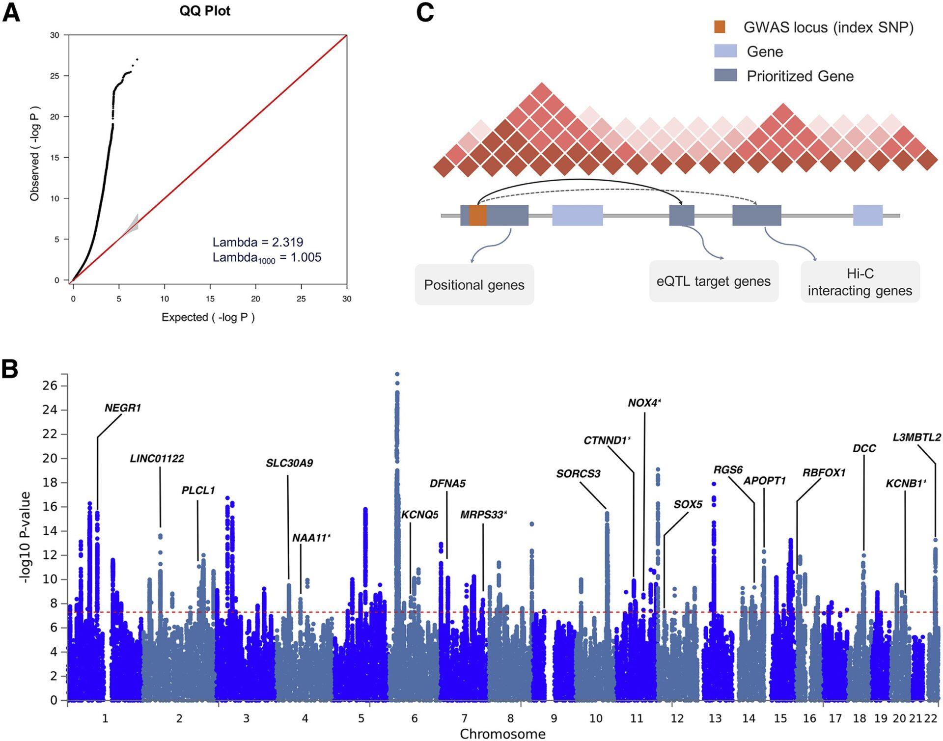 Рисунок 2 Результаты мета-анализа перекрестных расстройств и картирования генов-кандидатов