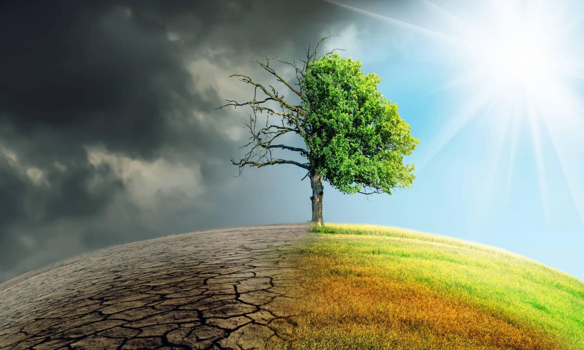 Как изменение климата влияет на аллергию, иммунный ответ и аутизм