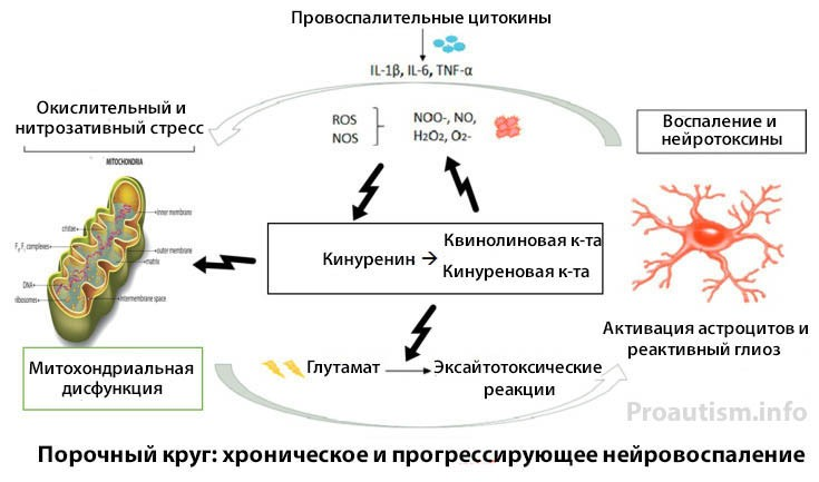 Порочный круг хронического нейровоспаления