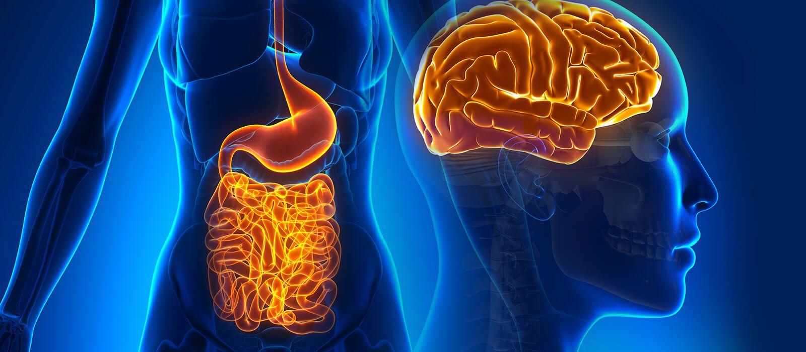 лечение неврологических расстройств через микробиом кишечника